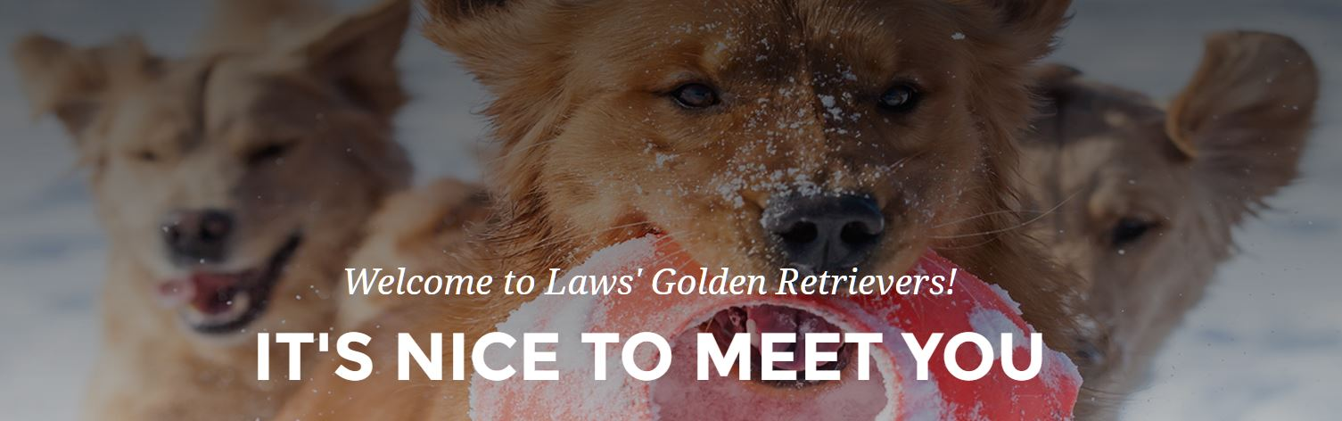 Laws Goldens